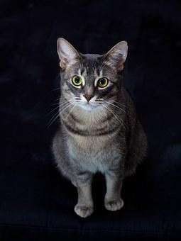 Common Pet Meds For Cat