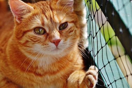 5 Tips In Hiring A Good & Skillful Pet Sitter