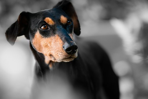 Protect Your Dogs Eyes With A Dog Insurance Policy