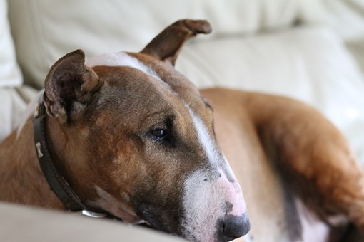 Understanding Allergy Symptoms In Dogs