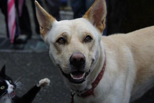 Martha Stewart Likes Dogs?